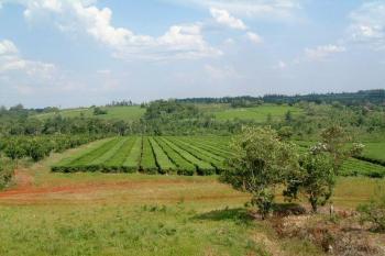 В Изяславском районе мужчина незаконно пользовался более 150 гектарами земли